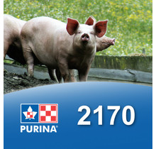 2170 - Porc début et croissance