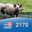 Cargill-Purina 2170 - Porc début et croissance