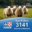 Cargill-Purina 3141 - Sup-R-Bloc mouton et chèvre