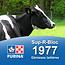 Cargill-Purina 1977 - Sup-R-Block Génisse laitières