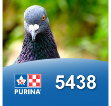 5438 - Gibiers à plumes (en cube pour ponte)