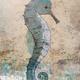 John Baran BLUE SEA HORSE, 9X12 PRINT ON WOOD