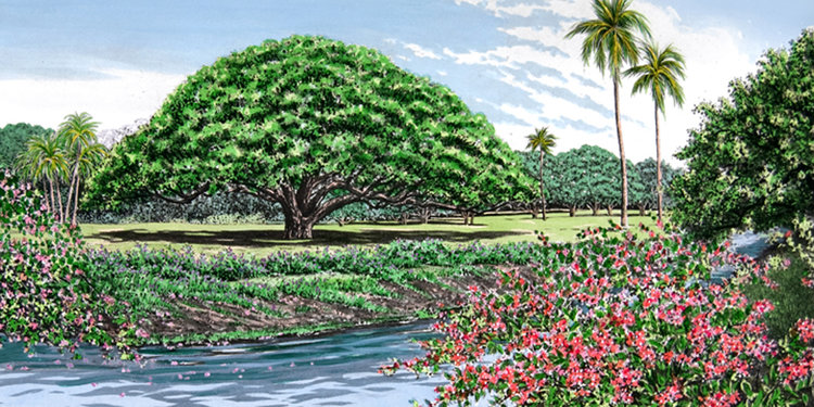 """Carol Collette Moanalua Gardens II, Limited Edition Drypoint Engraving with Watercolor, Matted. 15""""x24"""""""