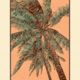 Aloha Posters PACIFIC PALMS , 11X14 MATTED PRINT
