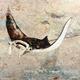 John Baran HAWAIIAN MANTAS WITH MAP, 9X12 PRINT ON WOOD