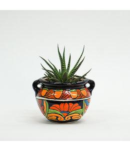 "Haworthia 4"" in Talavera Belly Pot"