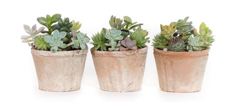 Six ways to Love and Care for your Succulents