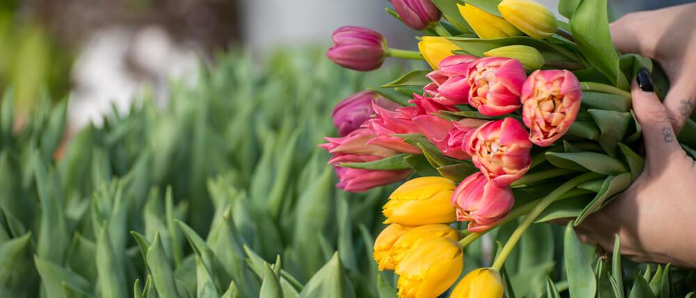 Tulipmania: A Celebration with Tulips