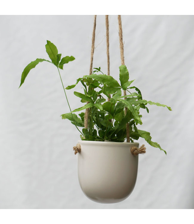 """Potcover, Hanging 3"""" White"""