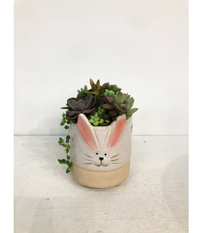 Planter, Succulent Lg Bunny