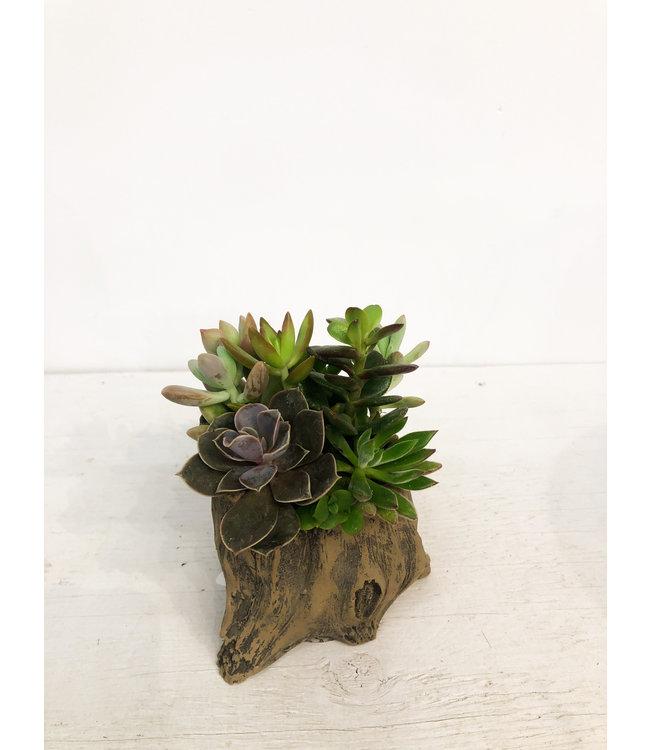 Planter, Succulent Log Sm