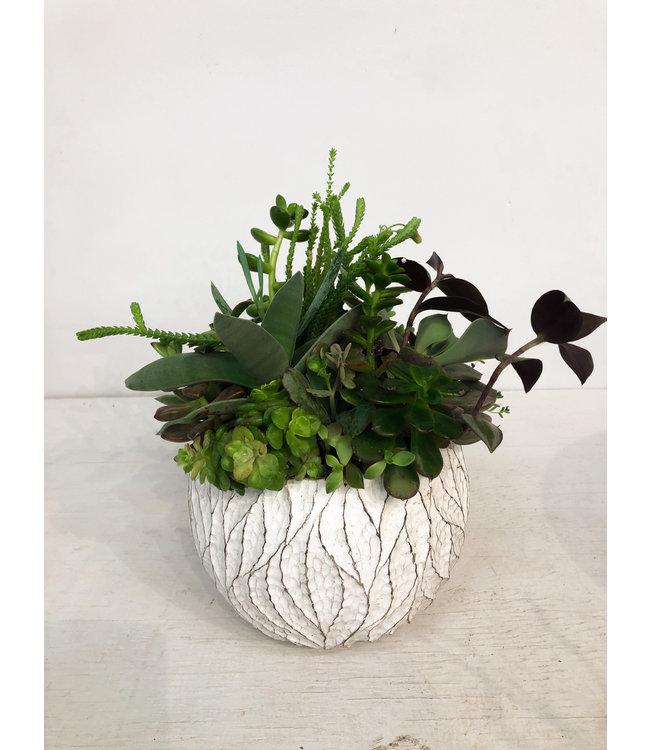 """Planter, Succulent Wh Asst 8"""""""