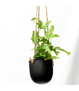 Potcover, Hanging  Black 3 in