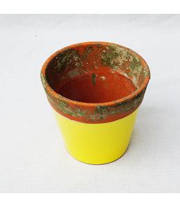 Pot, Yellow Terr 13cm