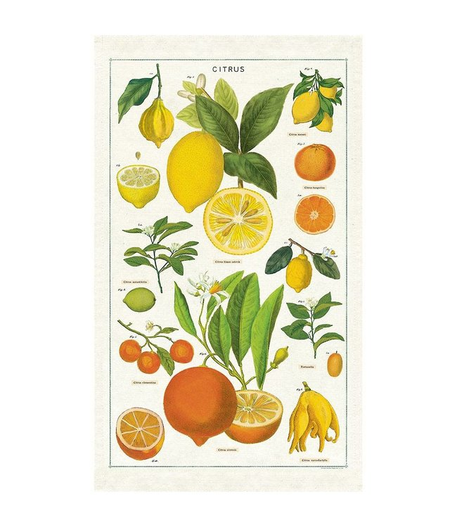 Tea Towel, Citrus