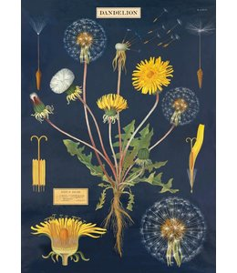 Tea Towel, Dandelion