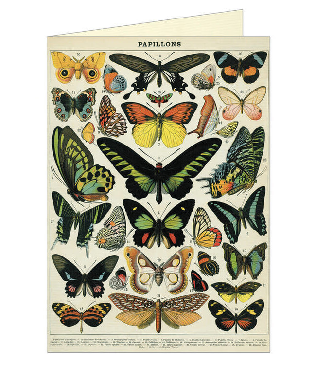 Card & Env, Butterflies