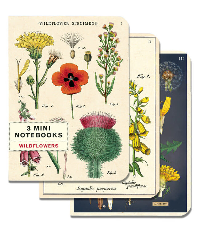 Notebook, Single Assorted
