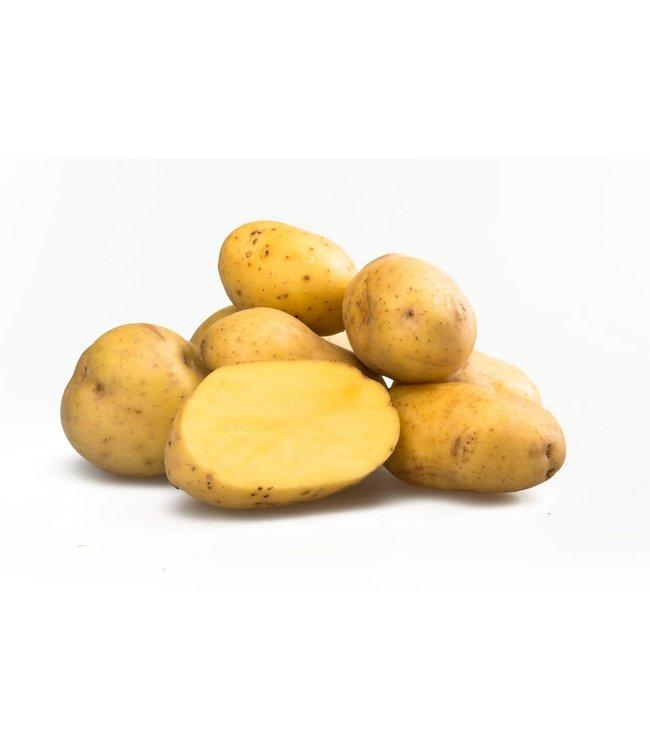 Seed Potato, Yukon Gold 5lb