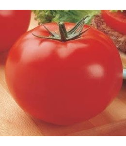 Tomato, Big Beef 4 in