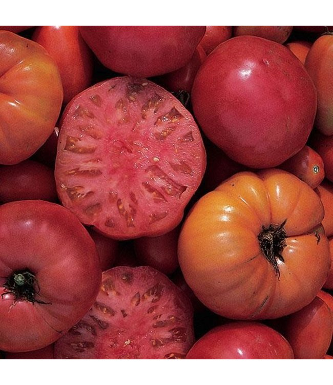 Tomato, Mortgage Lifter 4 in