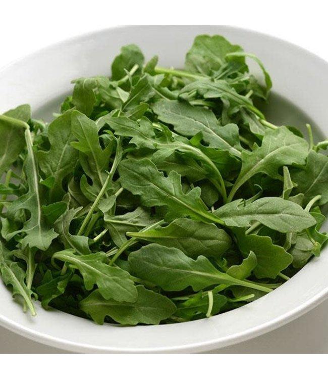 Lettuce, Buttercrunch 4 in