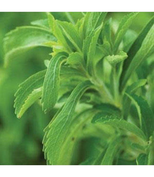 Herb, Stevia, Sugar Plant 4 in