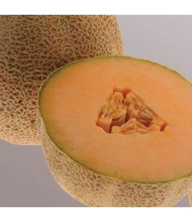 Melon, Snowmass Honeydew 4 in