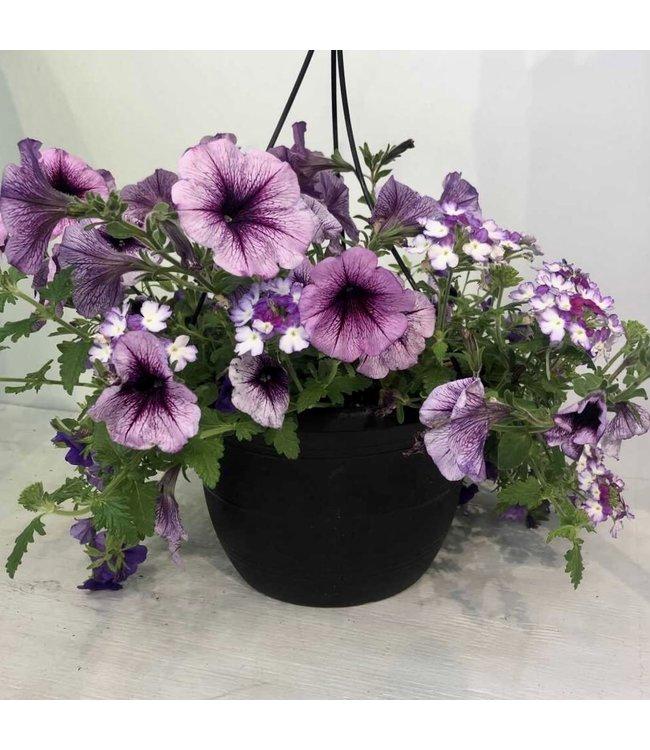 Basket, Calibrachoa Petunia Verbena Purple Mix 10 in