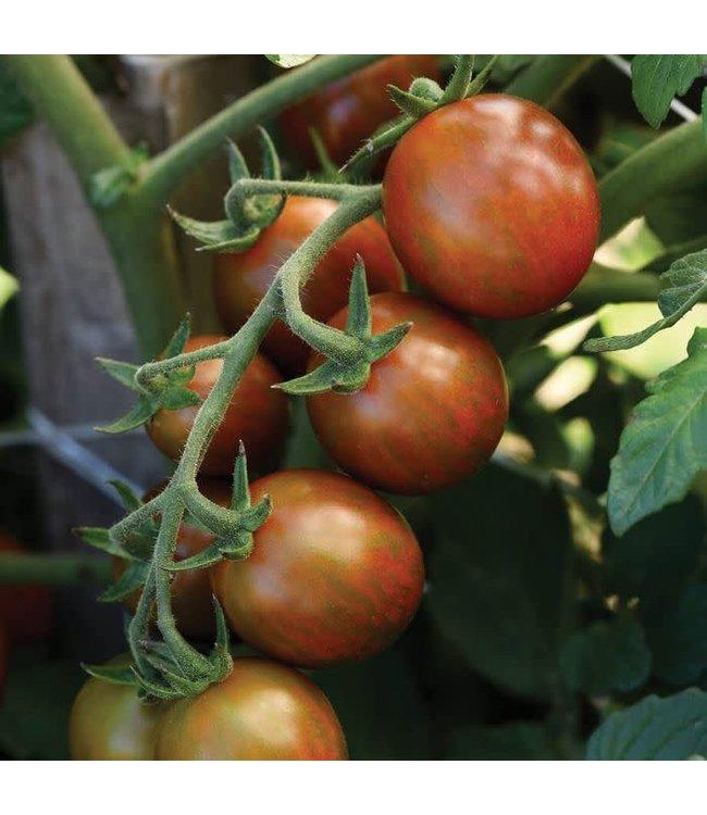 Tomato, Chocolate Sprinkles 1 gal