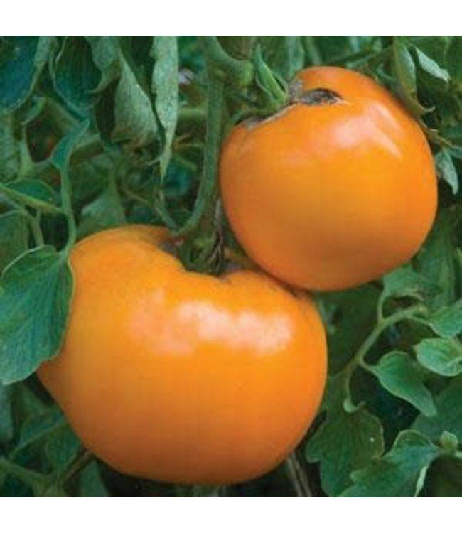 Tomato, Jubilee 1 gal