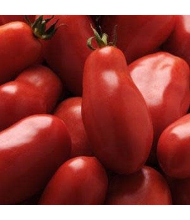 Tomato, San Marzano 1 gal