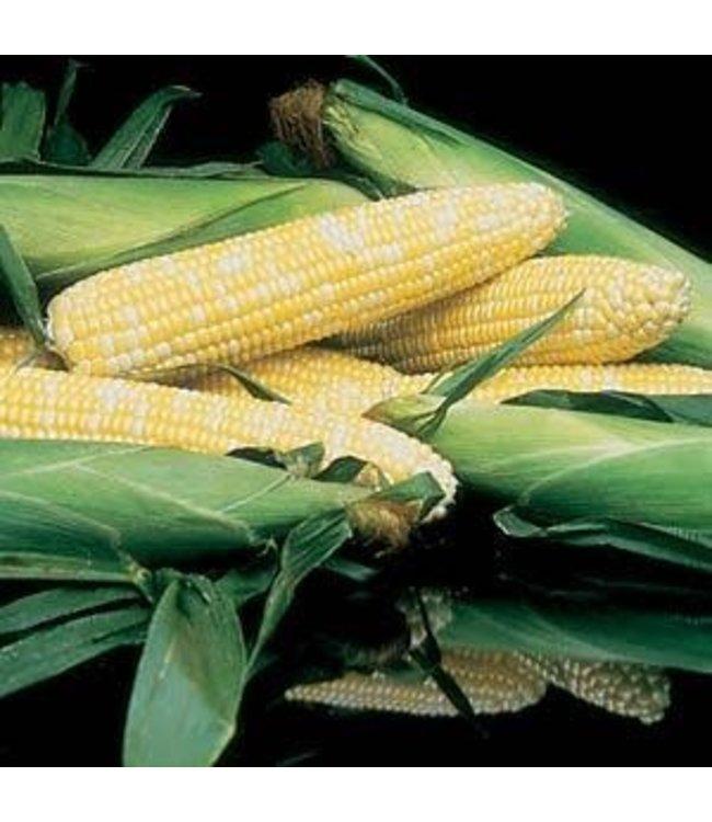 Sweet Corn, Honey N Pearl 4 in