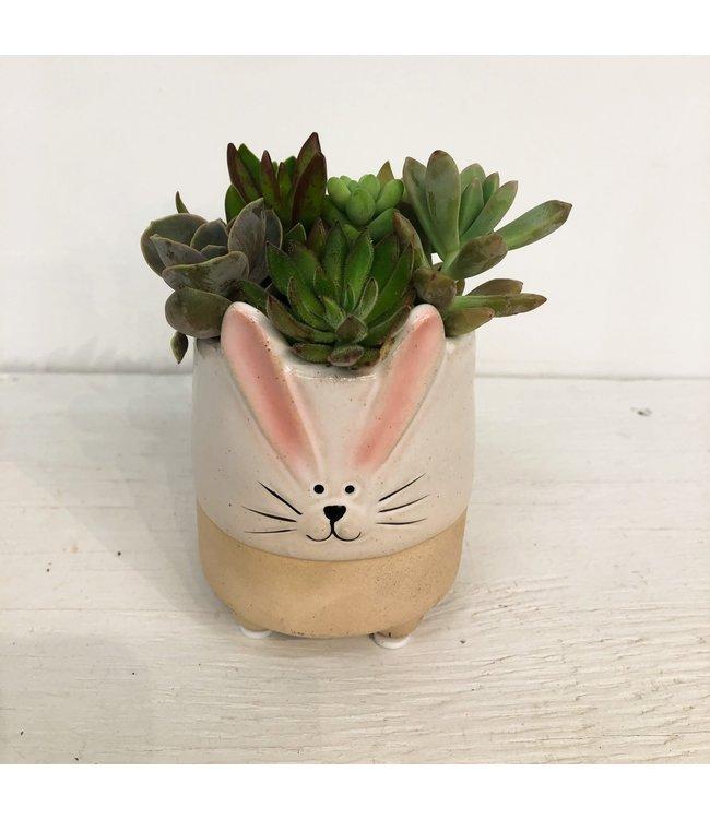 Planter, Succulent Med Bunny Asst