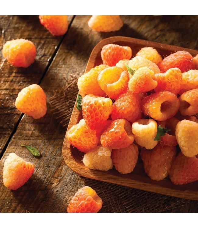 Raspberry, Fall Gold #1
