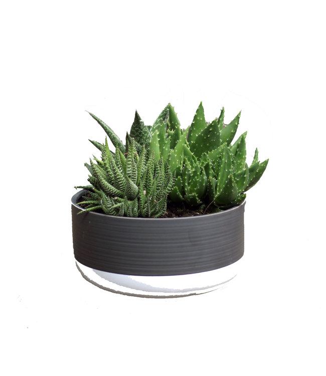 Succulent Asst 21cm Ceramic Bowl
