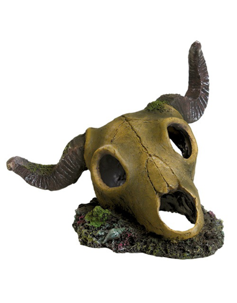 UNDERWATER TREASURES UT RAM SKULL