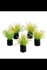 "UNDERWATER TREASURES Mini Plant - Spring Grass green - 1.25"" - 5 pk"