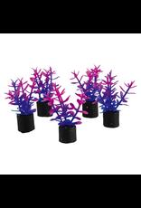 "UNDERWATER TREASURES Mini Plant - Violet - 1.5"" - 5 pk"
