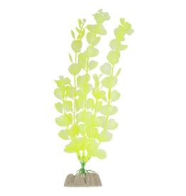 GLO FISH (W) GloFish Plant Large Yellow