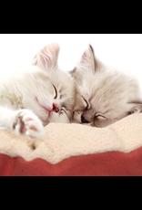 (D) Vesper Cat Bed - XLarge - Red - 60 x 60 x 20 cm (23.6 x 23.6 x 7.8)