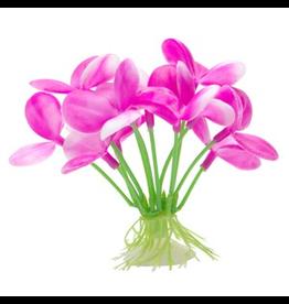"MARINA (D) Marina Betta Pink Orchid - 2.75"""