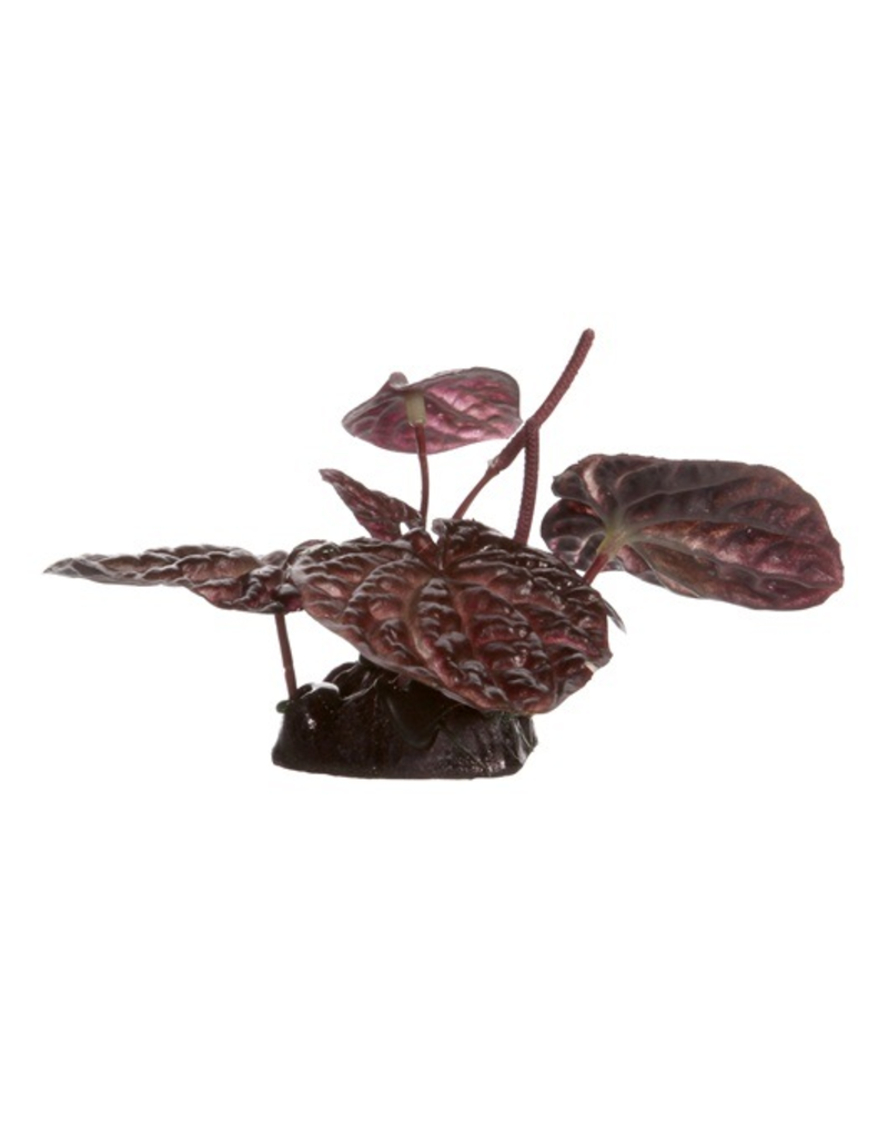 FLUVAL (D) Fluval Red Lotus, Small, 10cm(4in) w/Base
