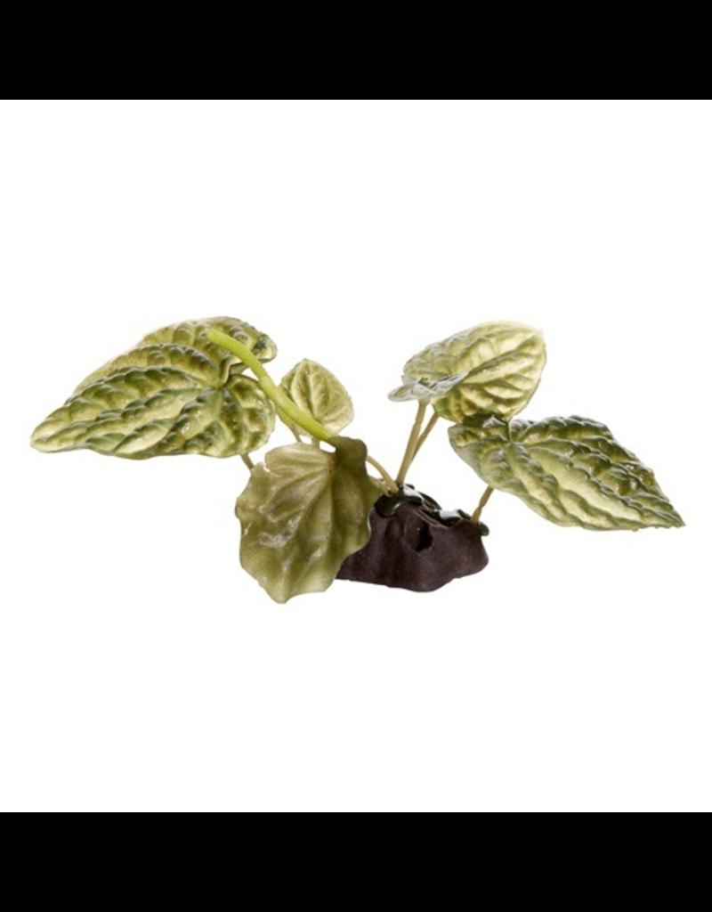 FLUVAL (D) Fluval Lotus, Small, 10cm(4in) w/Base