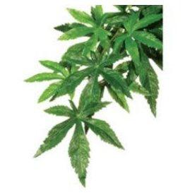 EXO TERRA Exo Terra Silk Plant Small Abutilon-V