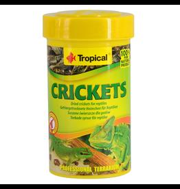 TROPICAL Tropical Dried Crickets - 10 g