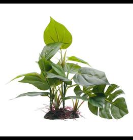 FLUVAL (W) FL Anubias, Large, 20cm (8in) w/ Base