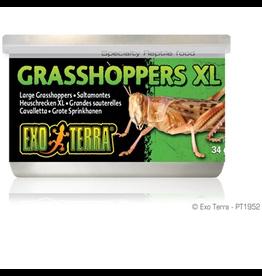 EXO TERRA (W) Exo Terra Canned Grasshoppers - XL - 34 g (1.2 oz)