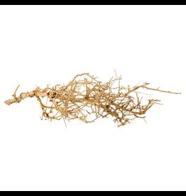 UNDERWATER TREASURES (W) Bird Nest Wood - Medium