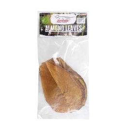 JURASSIC Jurassic Almond Leaves - Medium
